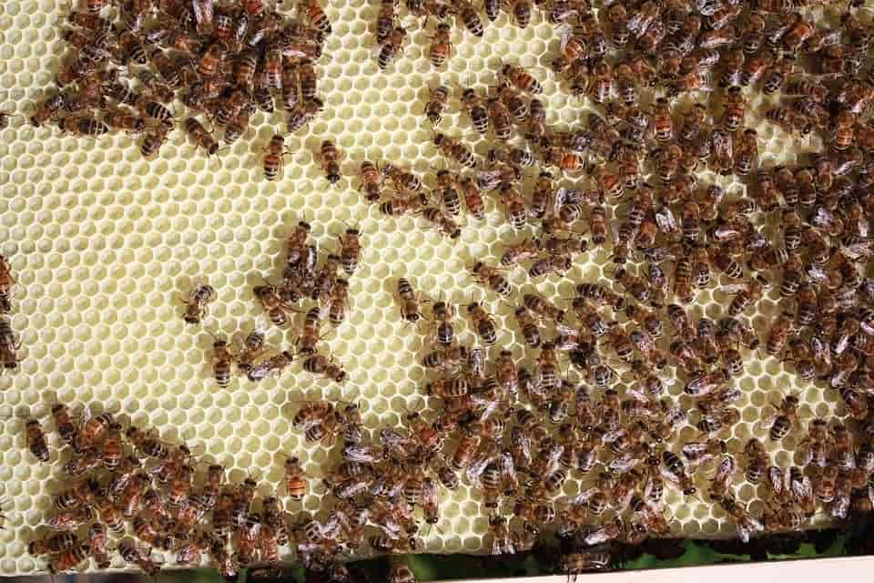 Közel van hozzánk a méhészbolt